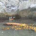We went in several very small caves on our kayak tour - careful manoeuvrings required! Great fun