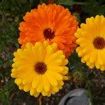 Flowers Botanic Gardens Dublin