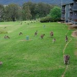 Every Evening, Kangaroos Were Outside Our #52 Villa