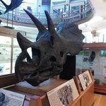 Tricératops teenager