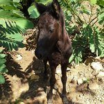 a foal at establo