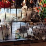 Cats crammed in cages