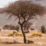 'Desert of Morocco'AzulAventuras