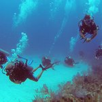 Diving with Living the Dream Divers