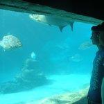 Há diversos aquários espalhados por todo o complexo Paradize.