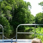 Stopping the boat to see the alligators in their natural habitat.