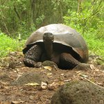 Giant Tortoises on Highlands Tour