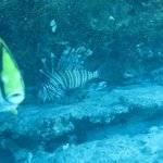 lionfish!