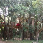 Maison dans les arbres (Chambre avec salle de bain et wc)
