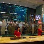 Accueil avec un joli aquarium