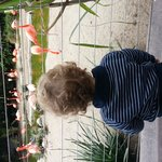 Flamingos and grandson loves them