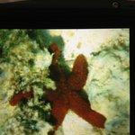 Starfish seen while snorkeling