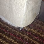 Water damage and  no baseboards where wall meets carpet.