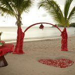 coconut trees decorated