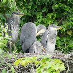 Get up close and personal on our wildlife cruises