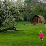 Wigwams/Orchard