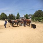 Temecula Wine Country Horseback Riding