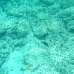 A fish we saw snorkeling