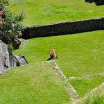 Algunos sitios para cultivo y cria de animales que los Incas utilizaban en el Machu Pichu