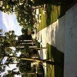 Row of beautiful frangipani trees