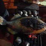 huge titan triggerfish and clams