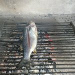 Excellent fresh fish just out of  the sea . . .