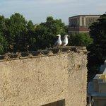 Meeuwen op vinkenslag, het moeten niet altijd duiven zijn!