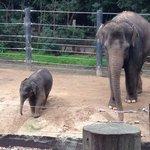 Super cute baby elephant
