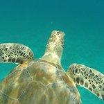 Little Green Sea Turtle :-D