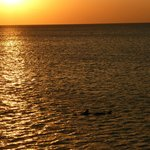 Sunset from Naples pier - two dolphins crossing