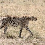 May 2014 Safari with Warrior Trails in Tanzania