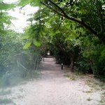 The pathway to the bandas... About 300m from beach.