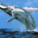 Whale watching from our beach from August onwards