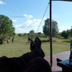 view from verandah with wildebeest