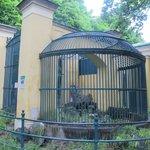original cage