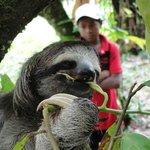 Sloth spotting