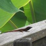Friendly lizards