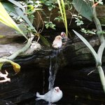 Birds taking a bath