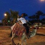 Camel harasser outside hotel