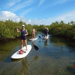 Paddling through the mangrove trail