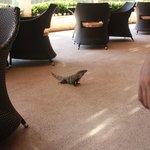 Breakfast with the iguana