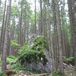 The forest is very nice indeed, next to the trail surrounding Hintersee