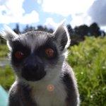 Ringtail Lemur island on the canoe