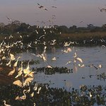 Foto de Araras Pantanal Ecolodge