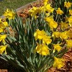 Spring loveliness