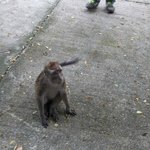 Monkey on the farm grounds