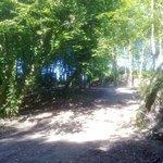Woodland Walk Area