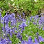 Woodland Stumpery area