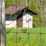Bird on the fence