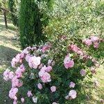 connubio ...livo e rose